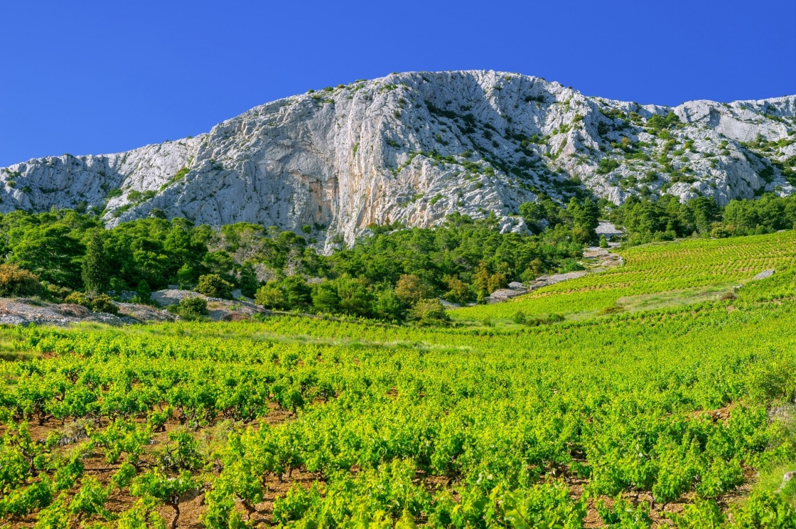 'Vineyards, southern coast of Hvar island, west of Sveta Nedjelja, Croatia' - Hvar
